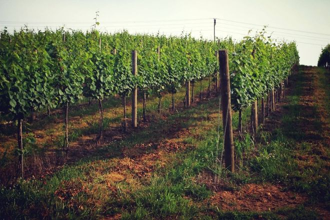 Creek's Edge Winery, Lovettsville, United States