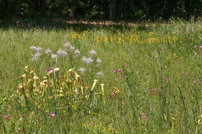 Crosby Arboretum, Picayune, United States