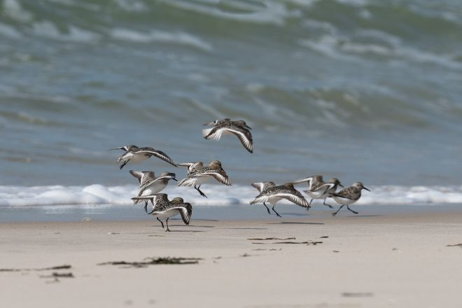 Cupsogue Beach County Park, Westhampton Beach, United States