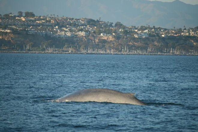 Dana Wharf Whale Watching & Sportfishing, Dana Point, United States