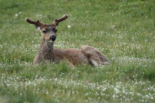 Deer Park Road, Olympic National Park, United States