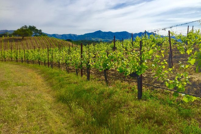 Demetria Winery & Vineyard, Los Olivos, United States