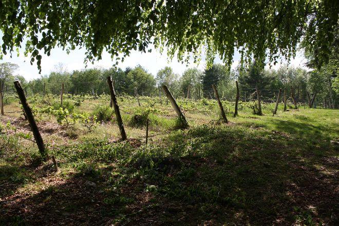Diamond Hill Vineyards, Cumberland, United States
