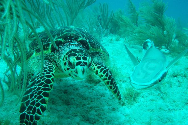 Dive Duck Key, Duck Key, United States