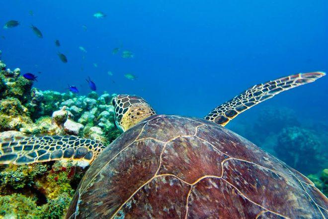 Divers Direct Key Largo, Key Largo, United States
