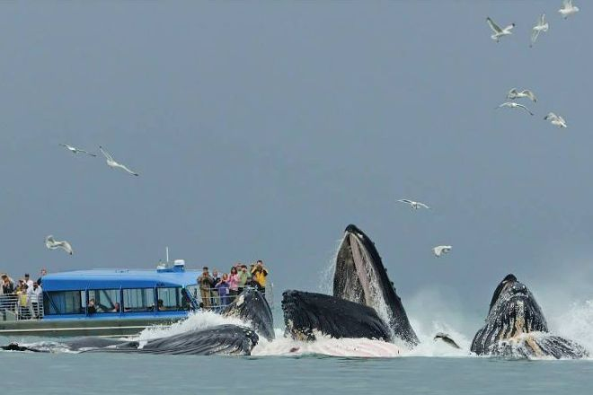 Dolphin Jet Boat Tours, Juneau, United States