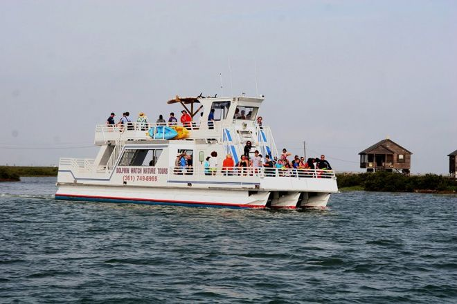 Dolphin Watch Nature Tour on the Mustang II Port Aransas, Port Aransas, United States