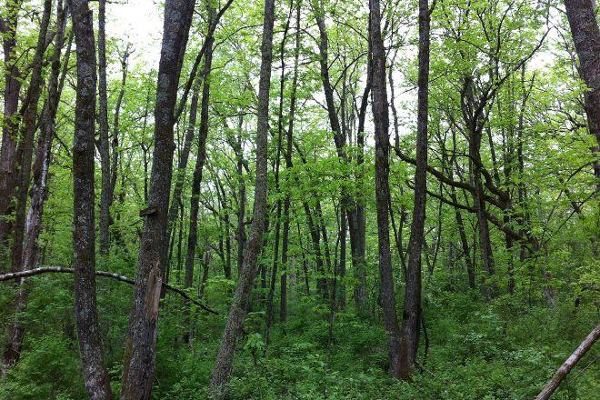 Donald County Park, Mount Horeb, United States