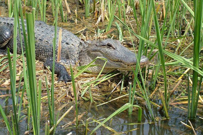 Dr. Wagner's Honey Island Swamp Tours, Slidell, United States