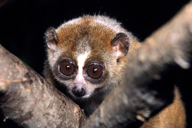 Duke Lemur Center, Durham, United States