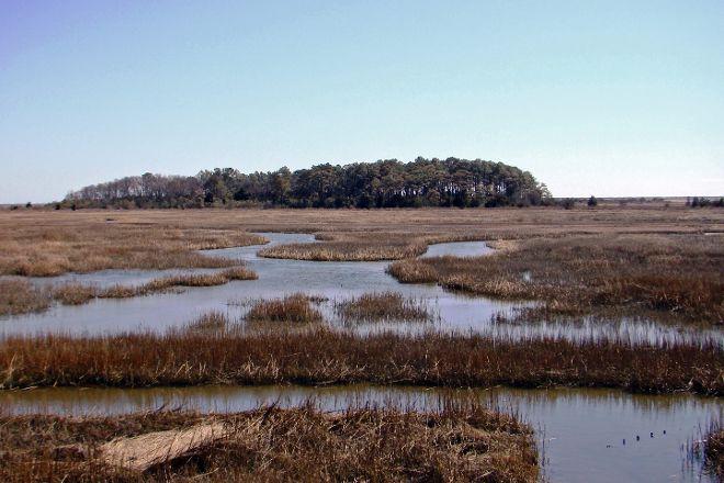 Eastern Shore of Virginia National Wildlife Refuge, Cape Charles, United States