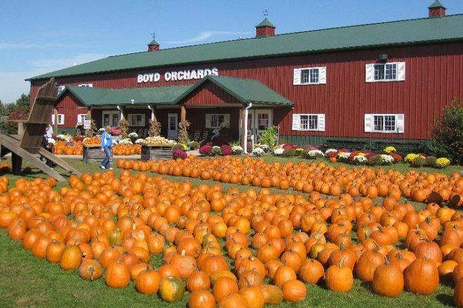 Eckert's Orchard, Versailles, United States