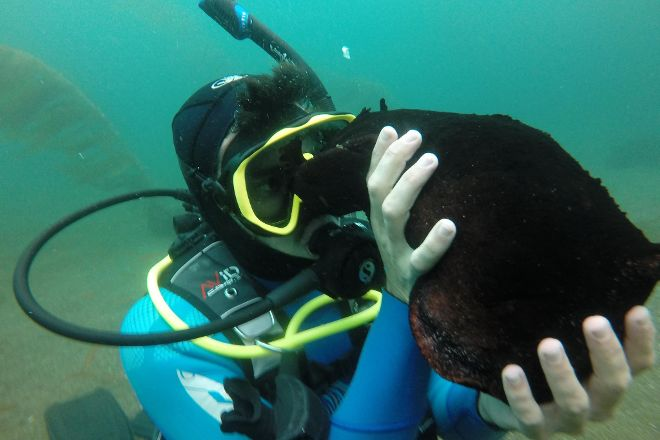 Eco Dive Center, Culver City, United States