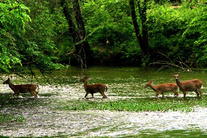 Eno River State Park, Durham, United States