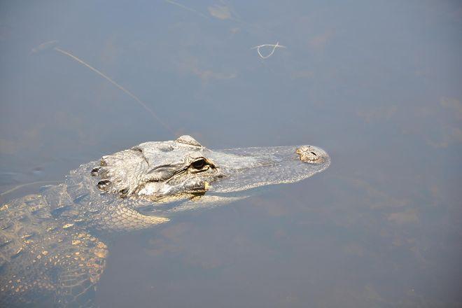 Everglades Safari Park, Miami, United States