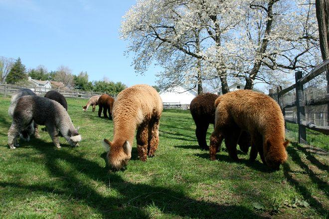 Faraway Farm Alpacas, Yorktown Heights, United States