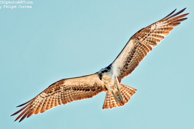 Florida Keys Wild Bird Rehabilitation Center, Tavernier, United States