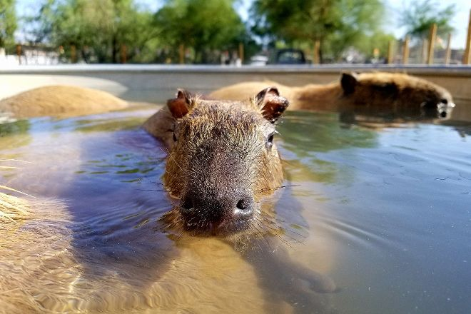 Funny Foot Farm and Tucson Petting Zoo, Tucson, United States