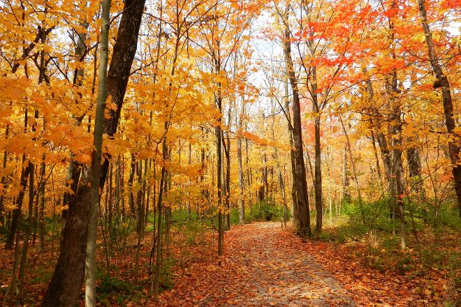 Gallant Woods Preserve, Delaware, United States