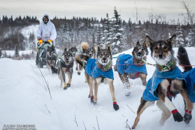 Girdwood Mushing Company, Girdwood, United States