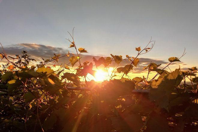 Gouveia Vineyards, Wallingford, United States