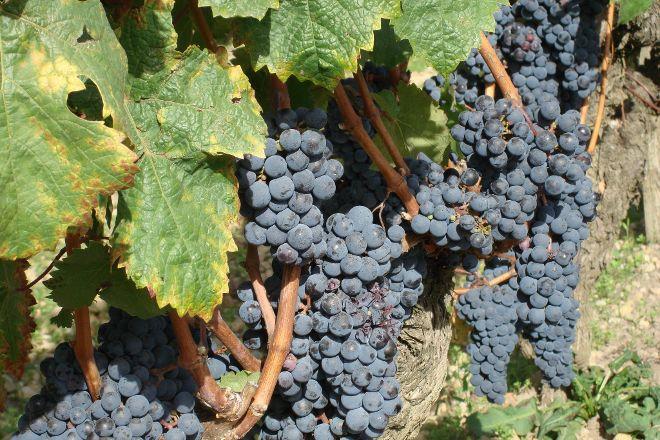 Grape Vine Springs Winery, Grapevine, United States