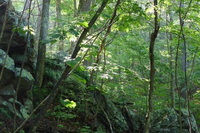 Green Ridge State Forest, Flintstone, United States