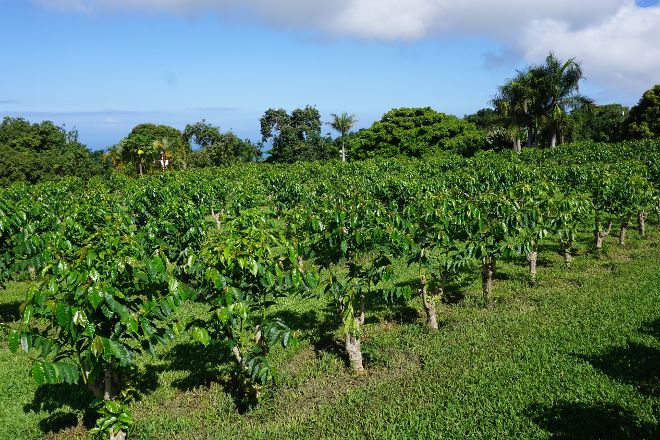 Greenwell Farms, Kealakekua, United States