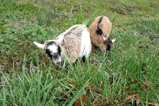 Happy Goat Trading Co, Blairsville, United States
