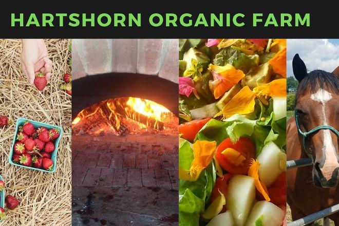 Hartshorn Organic Farm, Waitsfield, United States