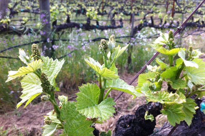 Hendry Ranch Wines, Napa, United States