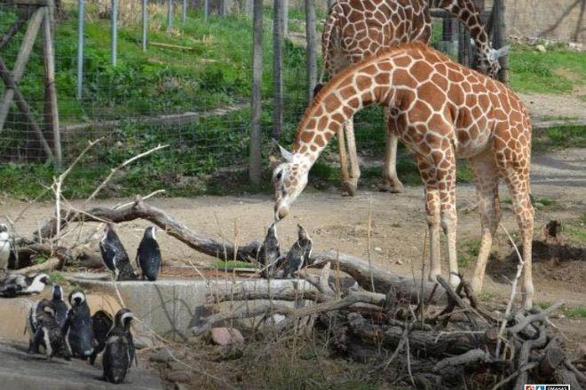 Henry Doorly Zoo, Omaha, United States