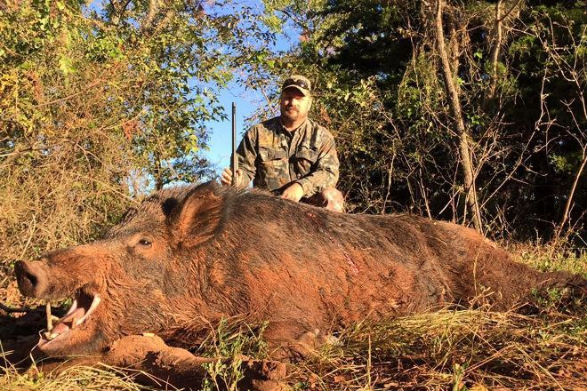 Hog Wild, Purcell, United States