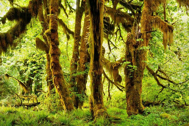 Hoh Rain Forest Visitor Center, Olympic National Park, United States