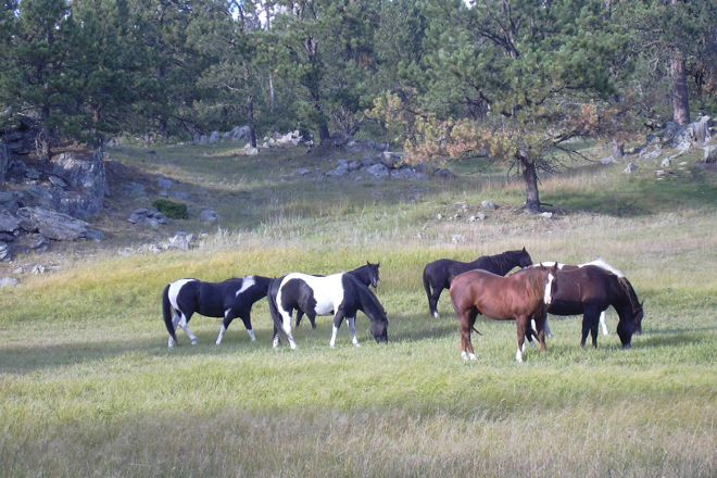 Hollingsworth Horses, Custer, United States