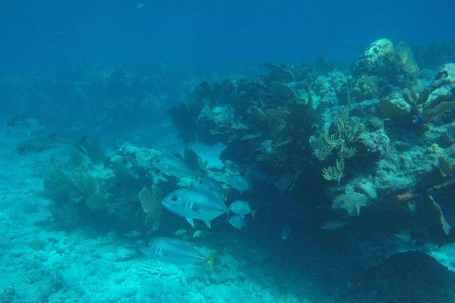 Honest Eco, Key West, United States