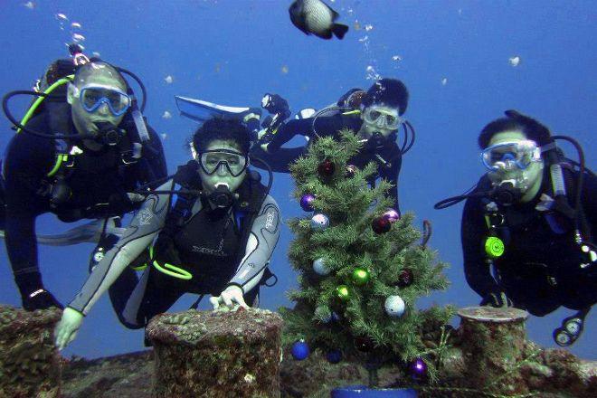 Honu Hawaiian Diving, Honolulu, United States