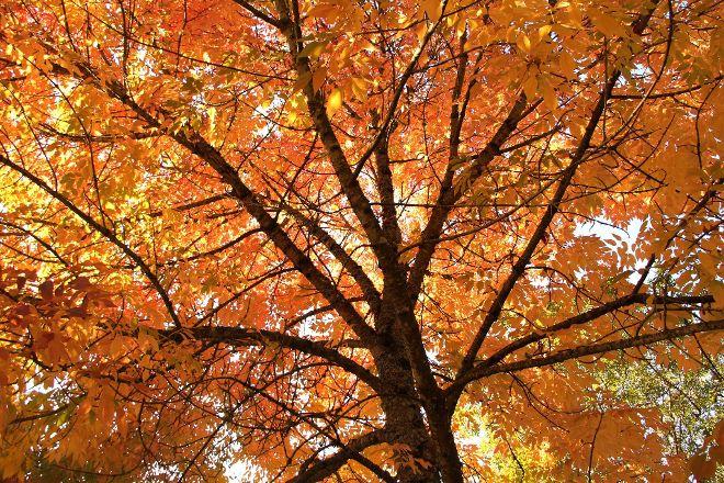 Hoyt Arboretum, Portland, United States