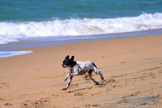 Huntington Dog Beach, Huntington Beach, United States