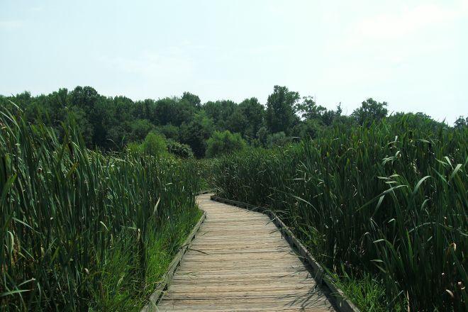 Huntley Meadows Park, Alexandria, United States