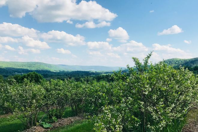 Ingalls Blueberry Hill, Milford, United States