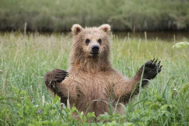 J Bear Tours, Homer, United States