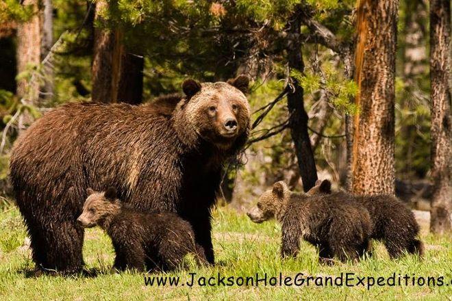 Jackson Hole Grand Expeditions, Jackson, United States