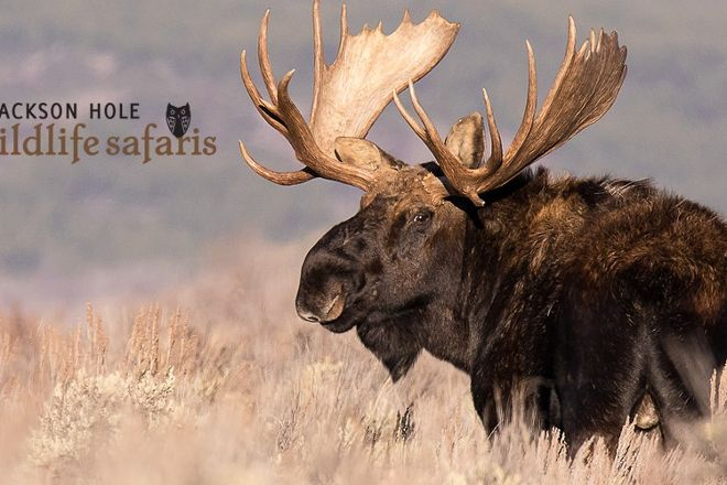 Jackson Hole Wildlife Safaris, Jackson, United States