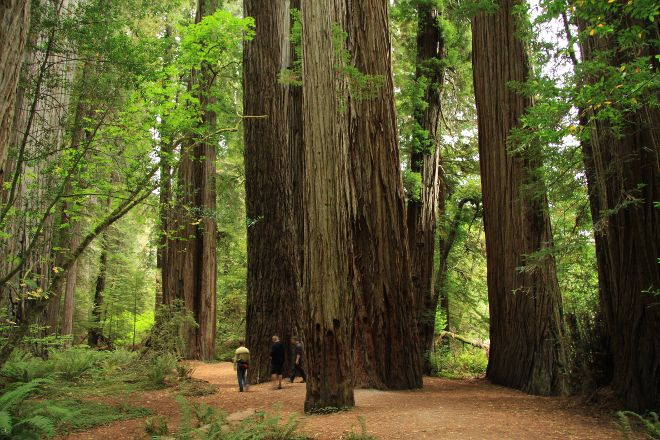 Jedediah Smith Redwoods State Park, Crescent City, United States
