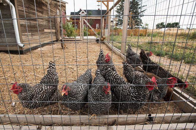 Jessup Farm Artisan Village, Fort Collins, United States