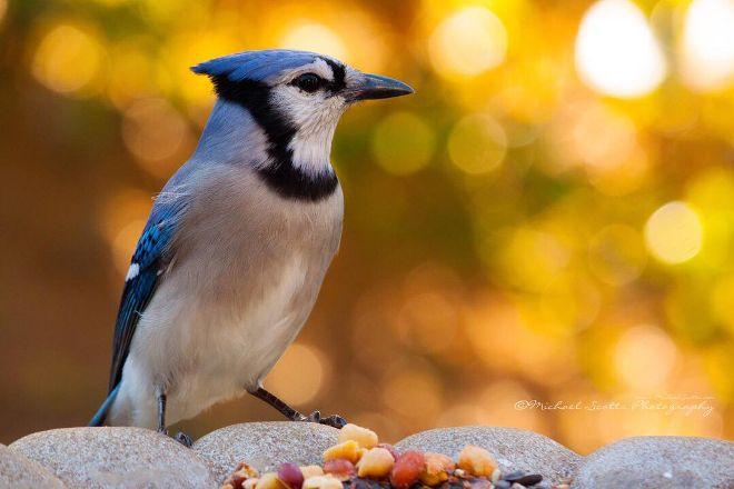 John Audubon Center at Mill Grove, Audubon, United States