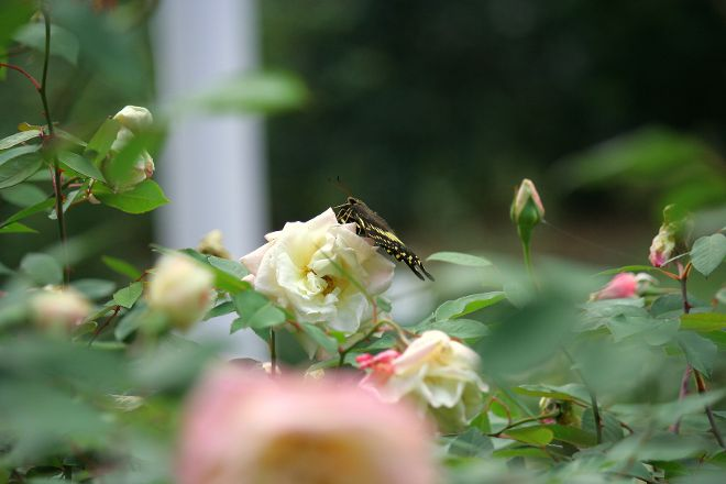 Kanapaha Botanical Gardens, Gainesville, United States