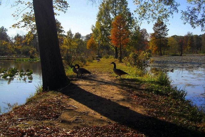 Kenilworth Park and Aquatic Gardens, Washington DC, United States