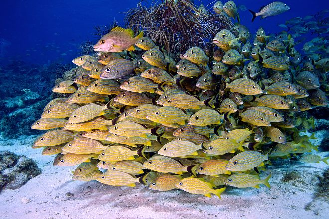 Key Dives, Islamorada, United States